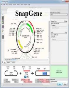 Download SnapGene 3.2.1 Win/Mac